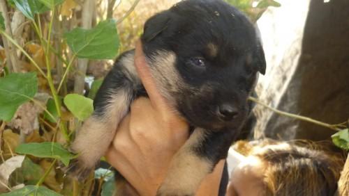 Fotolog de amigadelanimal: Puppies